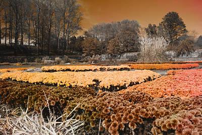 Biltmore Photograph - Flower Garden by Betsy Knapp