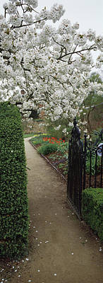 Cherry Blossoms Photograph - Flower Garden, York, North Yorkshire by Panoramic Images