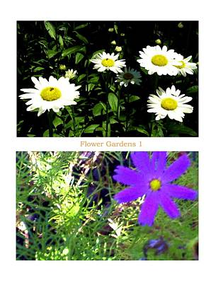 Photograph - Flower Gardens A by Mary Ann  Leitch