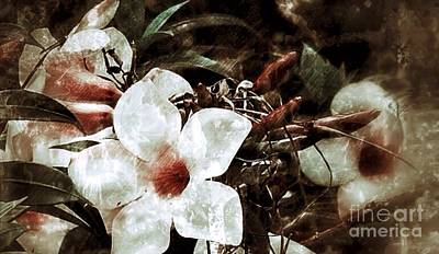 Photograph - Flower Grunge by Frank Williams