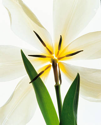 Designs In Nature Photograph - Flower Head, Lily by Panoramic Images