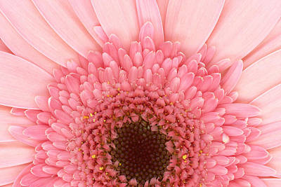 Scanography Photograph - Flower - I Love Pink by Mike Savad