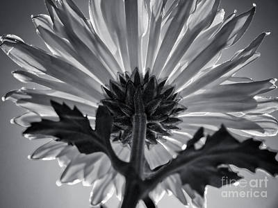 Different Points Of View Photograph - Flower IIi by Liesl Marelli