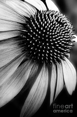 Photograph - Flower In Black And White by Michael Arend