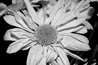 Photograph - Flower In Black And White by Tikvah's Hope