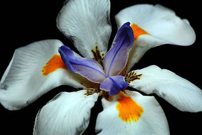 Flower In Bloom Art Print by Chris Whittle