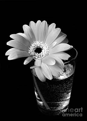 Photograph - Flower In Glass Of Water by Nina Ficur Feenan