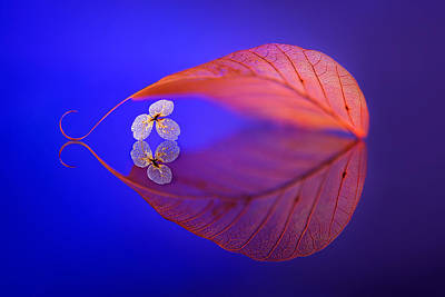 Gentle Photograph - Flower In Heaven by Sophie Pan