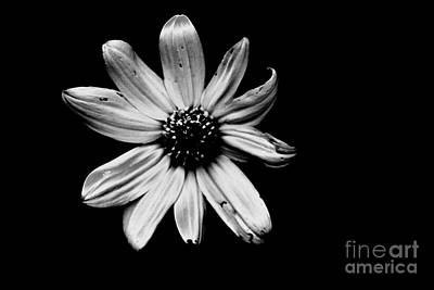 Photograph - Flower In The Dark by Xn Tyler