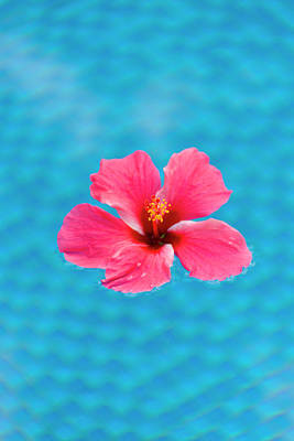 Micronesia Photograph - Flower In The Water For Decoration by Keren Su