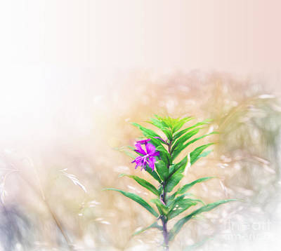 Photograph - Flower In Watercolor Duvet by Ed Churchill