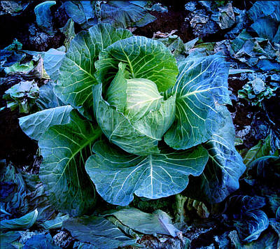 Cabbage Photograph - Flower by Julian Cook