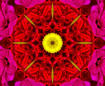 Photograph - Flower Kaleidoscope by Bill Barber