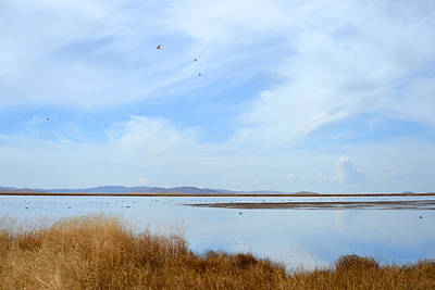 Photograph - Flower Lake by Yue Wang