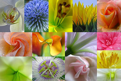 Flower Macro Photography Art Print