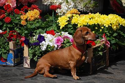 Photograph - Flower Market Guard Dog by Eric Tressler