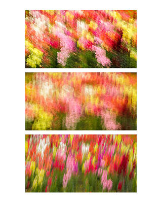 Flower Motion Abstract Collage Art Print by Alexander Kunz