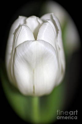 Photograph - Flower Of Bunny  by Cathy Dee Janes