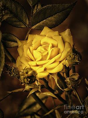 Flower Of Friendship  ... Art Print