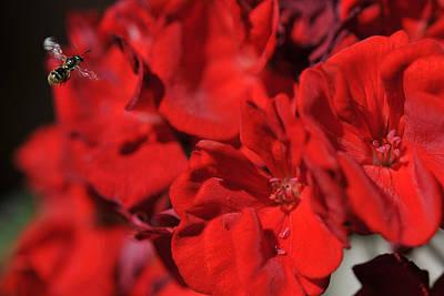 Photograph - Flower Of Interest by Dragan Kudjerski
