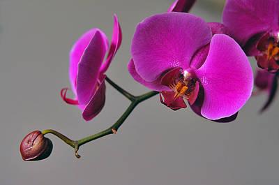 Photograph - Flower Of Love by Dragan Kudjerski