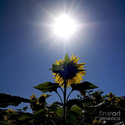 Flower Of Sunflowers Art Print