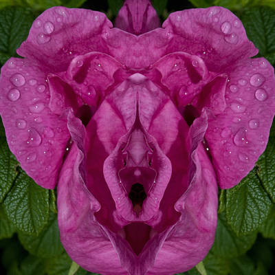 Photograph - Flower Of Venus 2 by WB Johnston