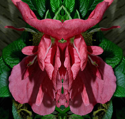 Photograph - Flower Of Venus 4 by WB Johnston