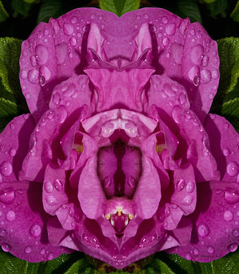 Photograph - Flower Of Venus 6 by WB Johnston