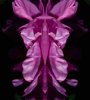 Photograph - Flower Of Venus 7 by WB Johnston