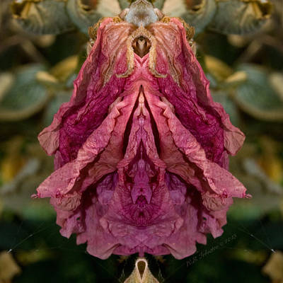 Photograph - Flower Of Venus 8 by WB Johnston