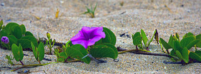 Photograph - Flower On The Sand by Dorothy Cunningham