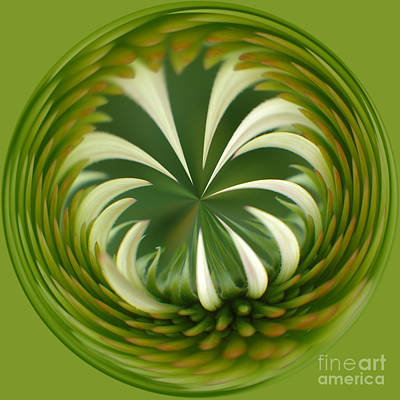 Photograph - Flower Orbital II by Sharon Seaward