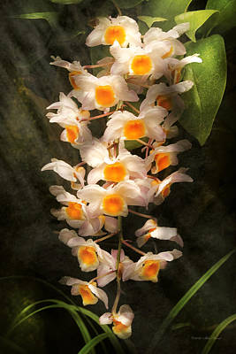Dendrobium Photograph - Flower - Orchid - Dendrobium Orchid by Mike Savad