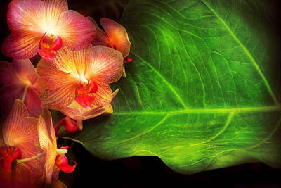 Flower - Orchid - Phalaenopsis Orchids At Rest Art Print by Mike Savad