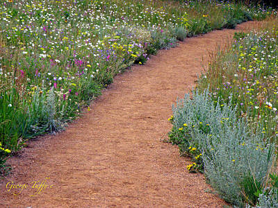 Photograph - Flower Path by George Tuffy