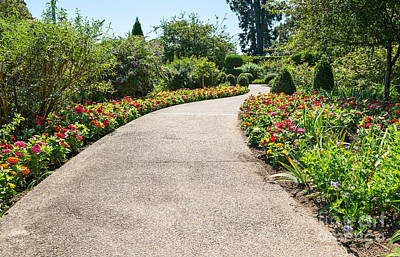 Contemplating Photograph - Flower Path by Jamie Pham
