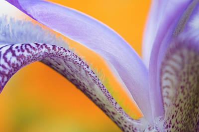 Yellow Bearded Iris Photograph - Flower Pattern Credit by Jaynes Gallery