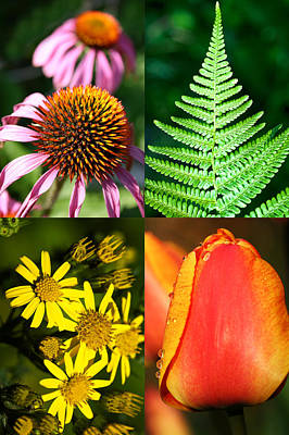 Flower Photo 4 Way Art Print