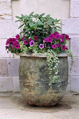 Napa Valley Photograph - Flower Pot 3 by Allen Beatty