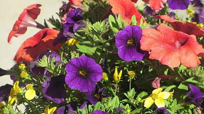 Photograph - Flower Pot Close Up by Anita Burgermeister