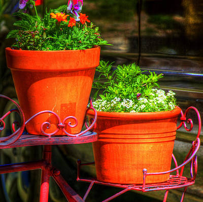 Jerry Sodorff Royalty-Free and Rights-Managed Images - Flower Pots 6103 by Jerry Sodorff
