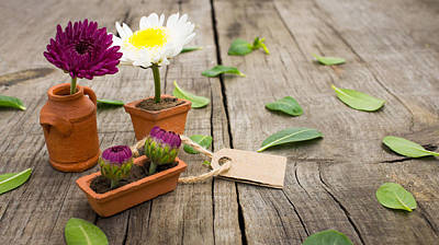 Fresh Flowers Photograph - Flower Pots by Aged Pixel