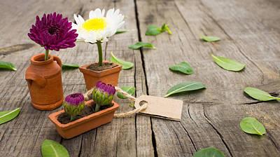 Flower Pots Art Print