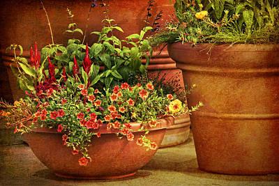 Photograph - Flower Pots by Nikolyn McDonald