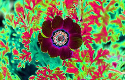 Spot Of Tea Royalty Free Images - Flower Power 1495 Royalty-Free Image by Pamela Critchlow