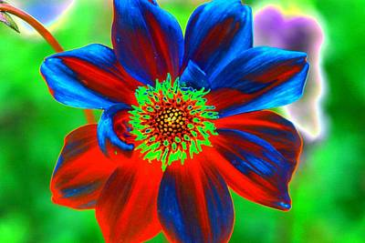 Photograph - Flower Power 721 by Pamela Critchlow