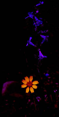 Photograph - Flower Power by Atom Crawford