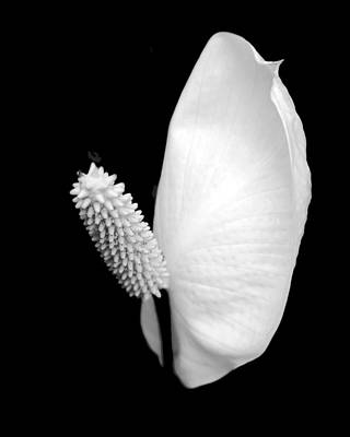 Floral Photograph - Flower Power Peace Lily by Tom Mc Nemar