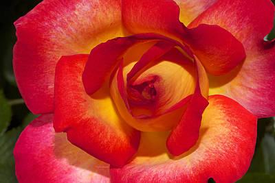 Flower Power Art Print by Phyllis Denton